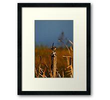 Small Bird #1 Framed Print