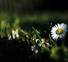 Untitled by photographerpundit