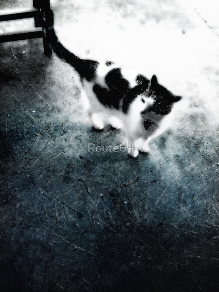 Cat blues by Route64