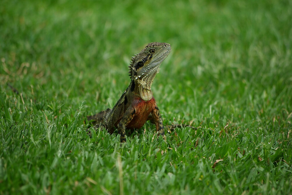 Water dragon on grass by Paul Mikkelsen