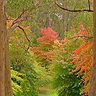 Autumn Colour by bombamermaid
