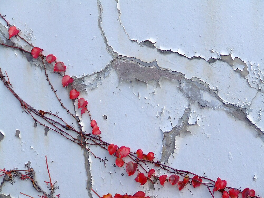 Red Vine 1 by Samara  Lee