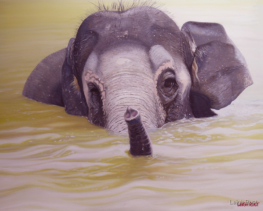 Bathtime - Asian elephant by Leigh Rust