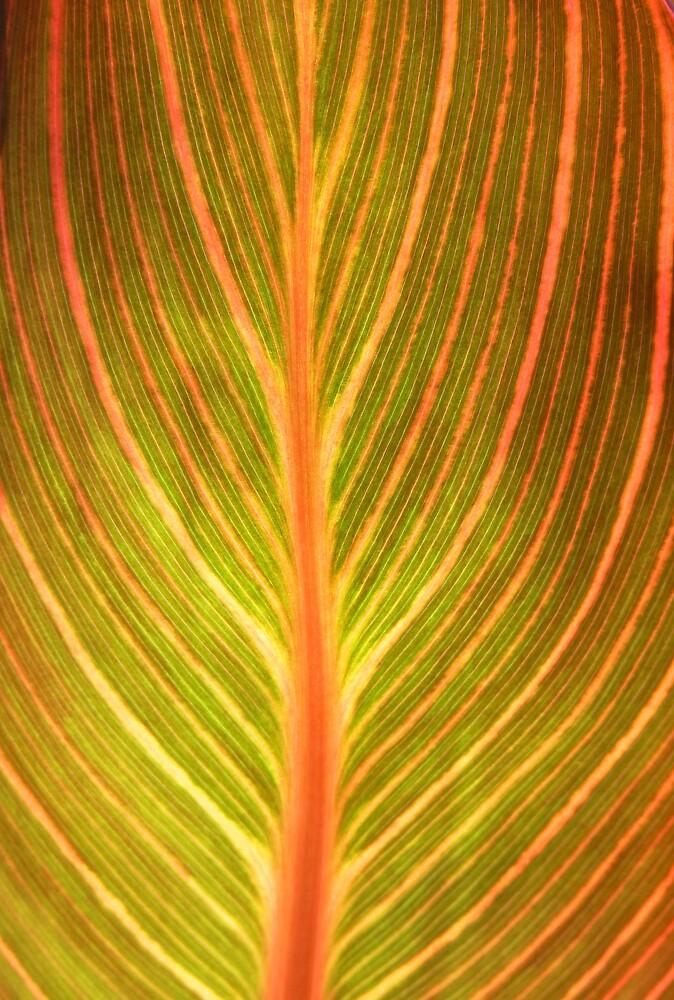 Red Gold Leaf by Tara Chiu