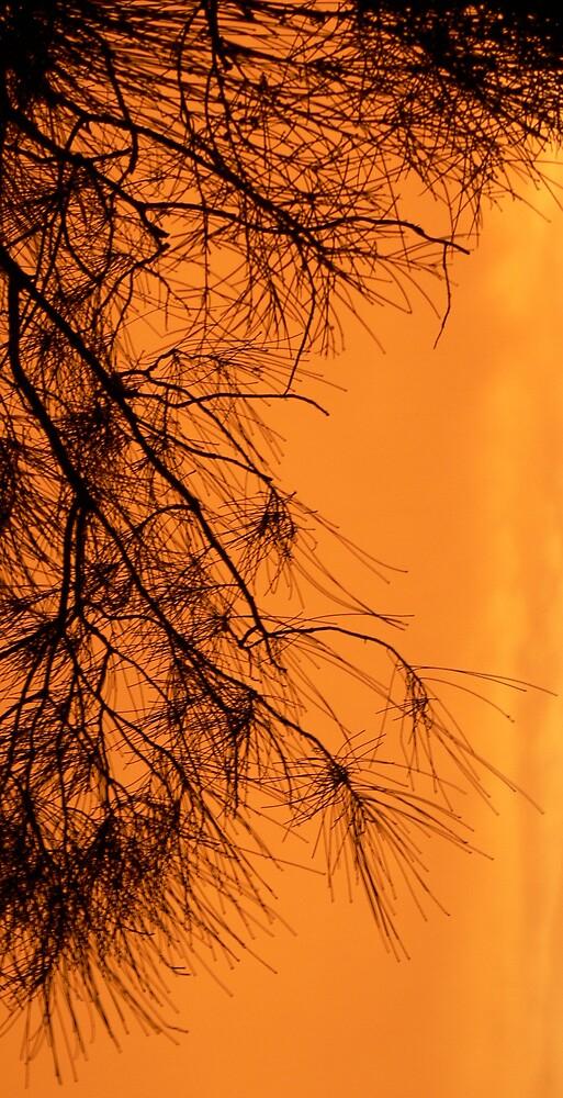 Sunset Tree by Tara Chiu