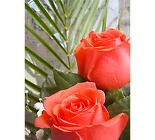 Soft red roses 2 Photographic Print