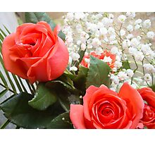 Soft red roses 3 Photographic Print