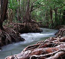 Rapid Creek by Brett Habener
