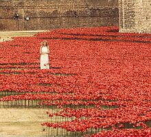 Flanders` Poppy in London by Christel  Roelandt