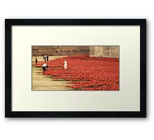 Flanders` Poppy in London Framed Print