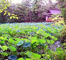 Zen Lotus by Brita Lee