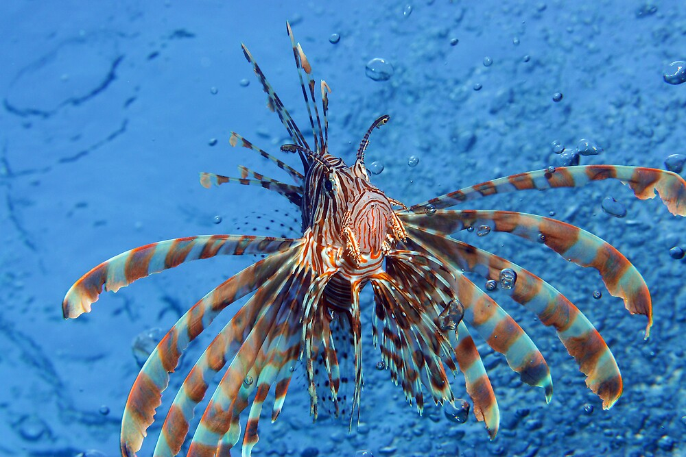 lionfish by lucy trippett