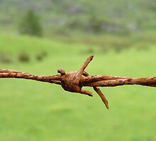 Barbed Wire by howley76