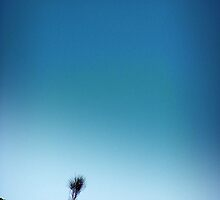 Blue Sky Tree by Gavin