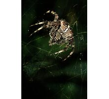Furry hunter Photographic Print