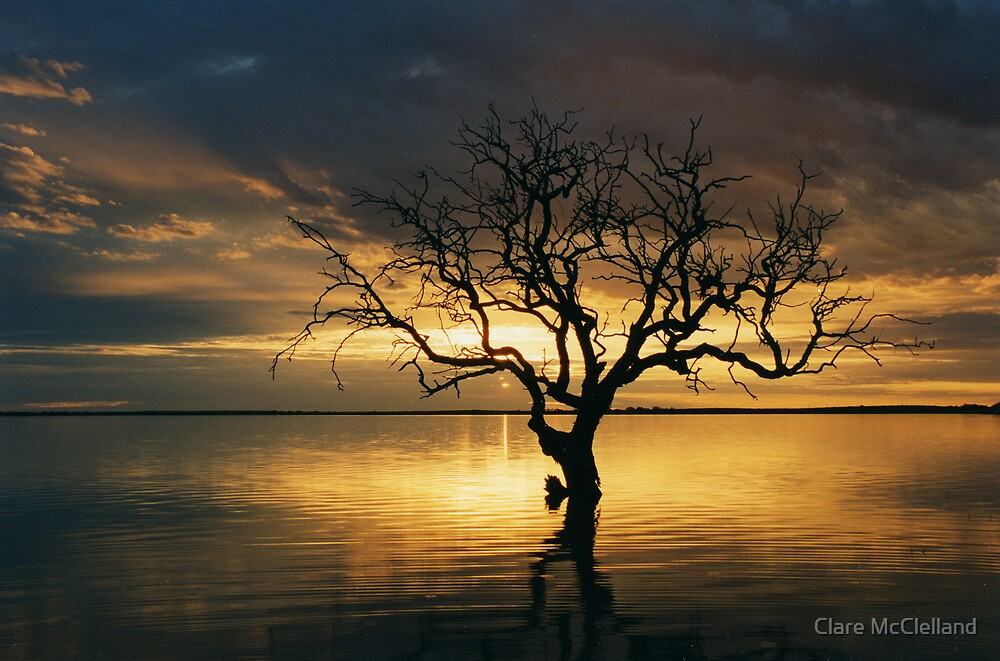 Tree of Silence, Coongie Lake  by Clare McClelland