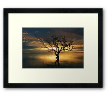 Tree of Silence, Coongie Lake  Framed Print