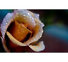 Kissed by the Rain Photographic Print
