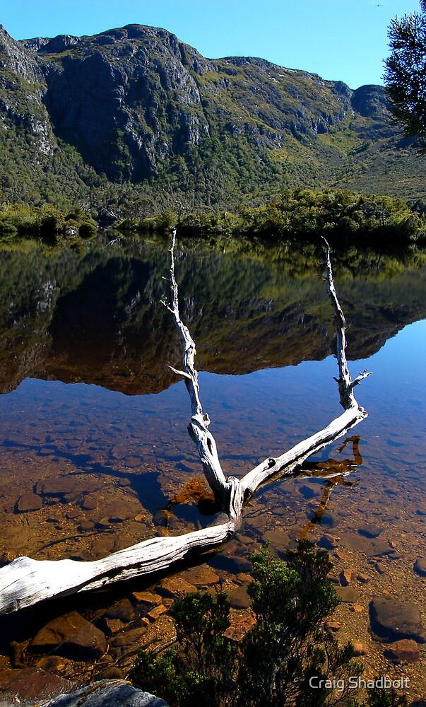 Reflections by Craig Shadbolt
