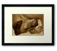 Sleeping Dog Framed Print