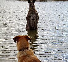 swimming buddies by Hawk