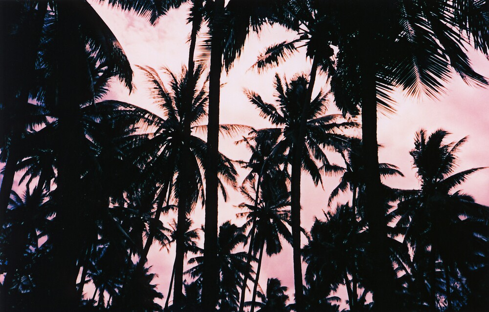 CoconutTrees by danno