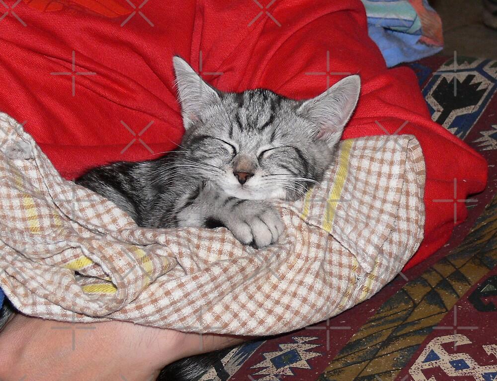 Cradled kitten by Sandra Chung