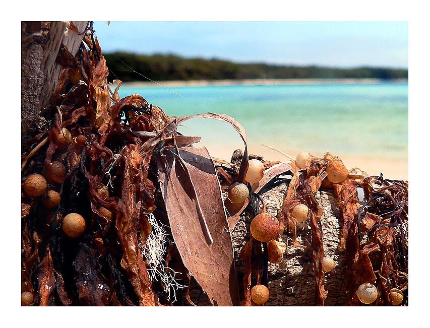 Seaside Weed by Bryant Evans