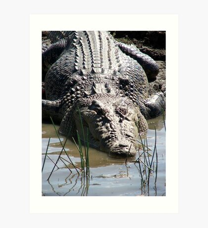 Estuarine Crocodile Art Print