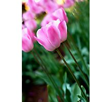 Splash of Tulips Photographic Print