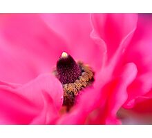 Pink Folds Photographic Print