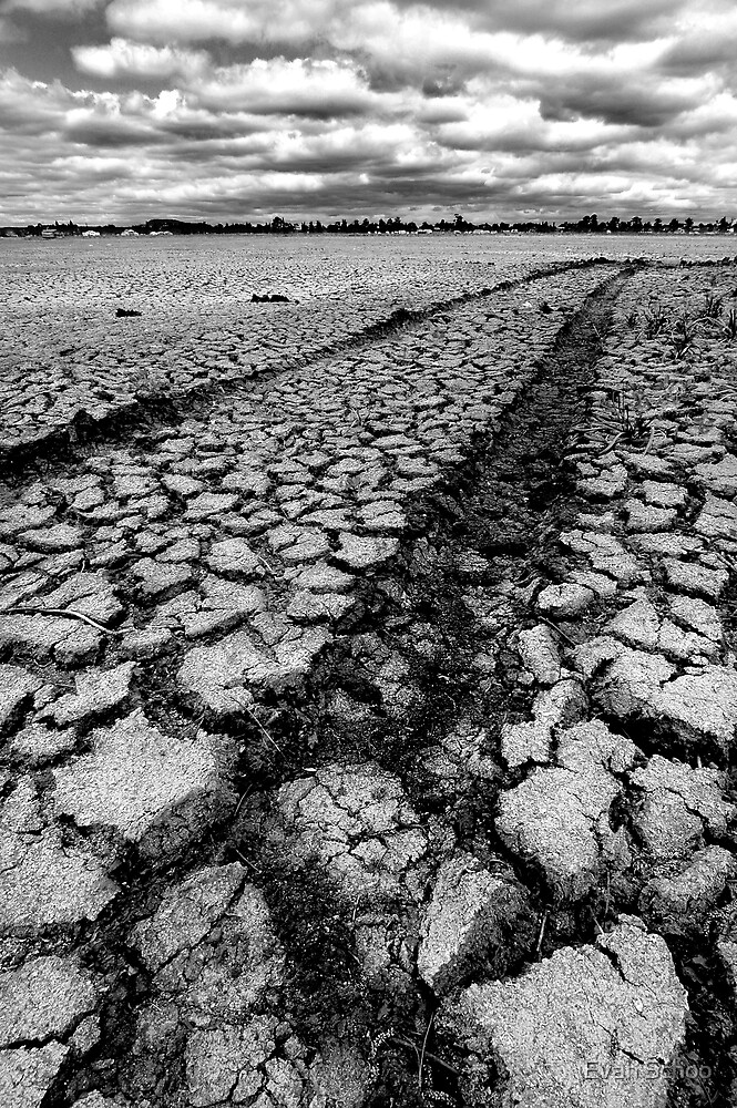 Parched Earth by Evan Schoo