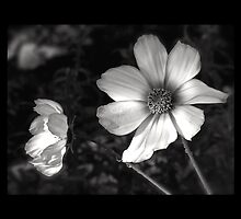 black and white flowers by Beth BRIGHTMAN