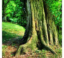 Soft Tree Photographic Print