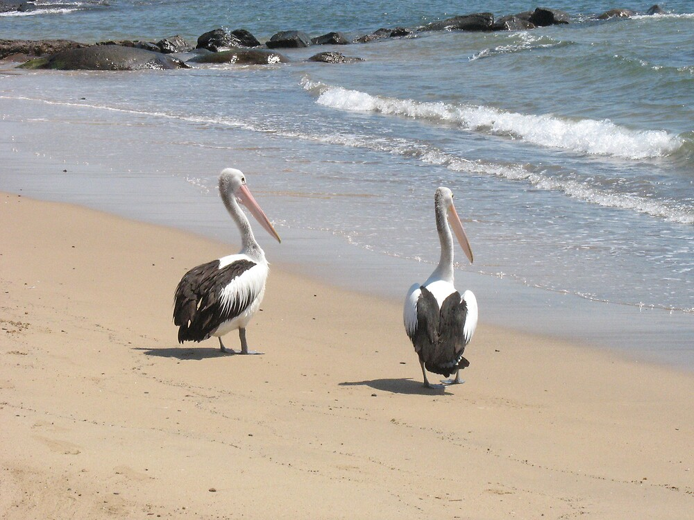 Pelicans by Julie Dunne