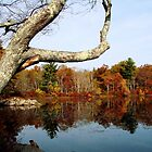 Fall Reflections by Tricia Stucenski