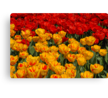 Mass of spring colour - Tulips in London Canvas Print