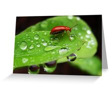 Drenched Greeting Card