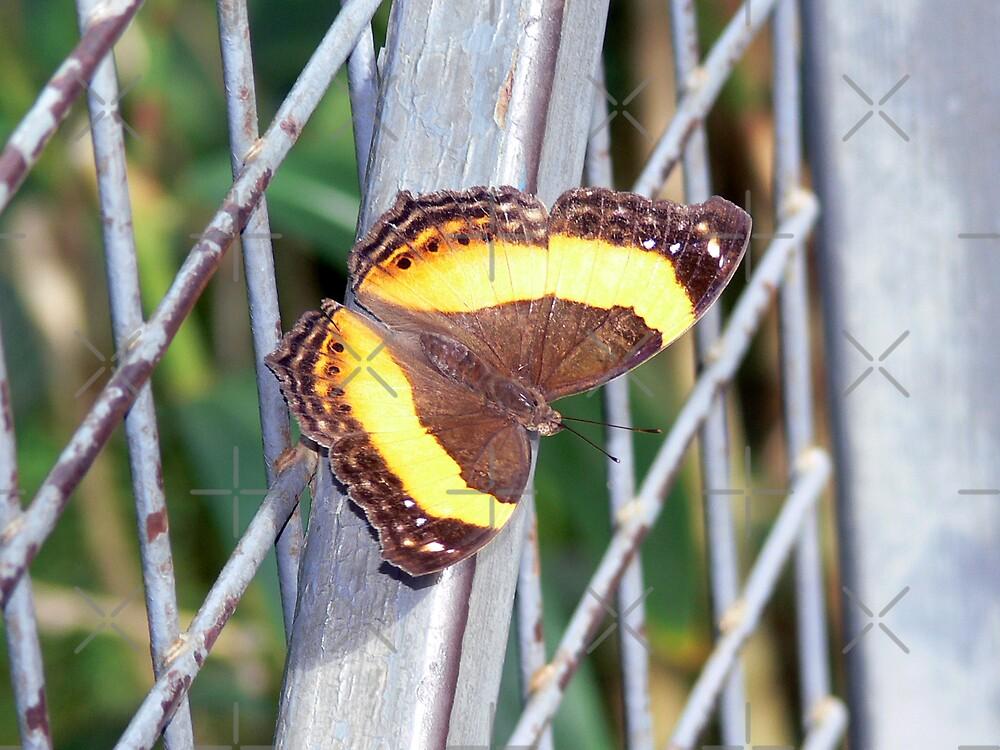Moth by Sandra Chung