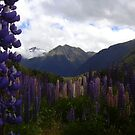 Lupin Fields by FataMorgana