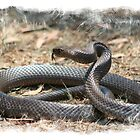 Brown Snake by Bandicoot