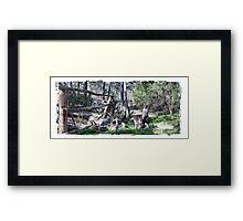 Joey Kangaroos Framed Print