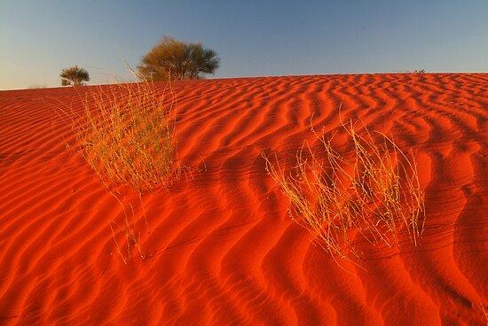 Sundown Madigan Line Simpson Desert by Joe Mortelliti