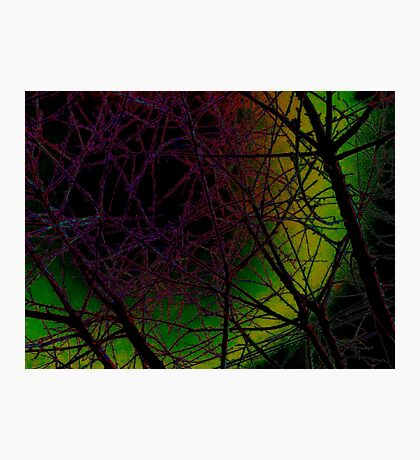 Colorful Bough Design Photographic Print