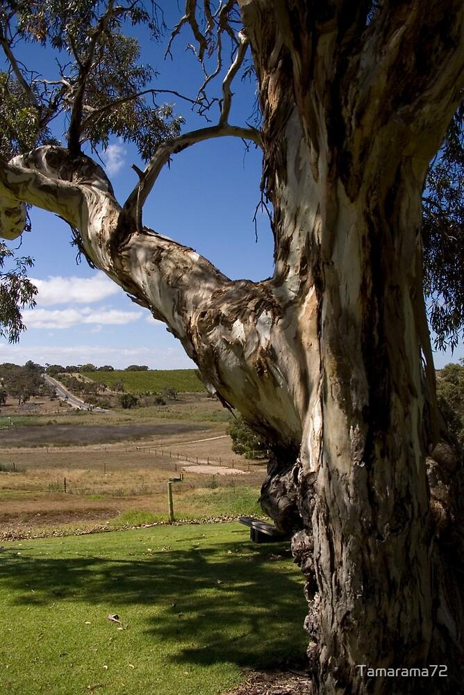 Southern View  by Tamarama72