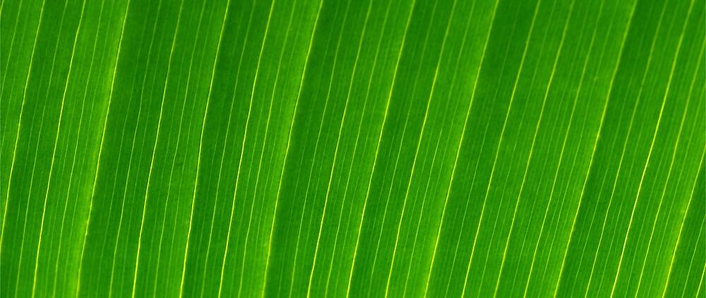 Palm Leaf by Stuart Hazeldine