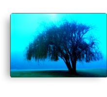 Willow tree blue Canvas Print