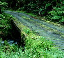 Cianco Creek,Otway Ranges by Joe Mortelliti