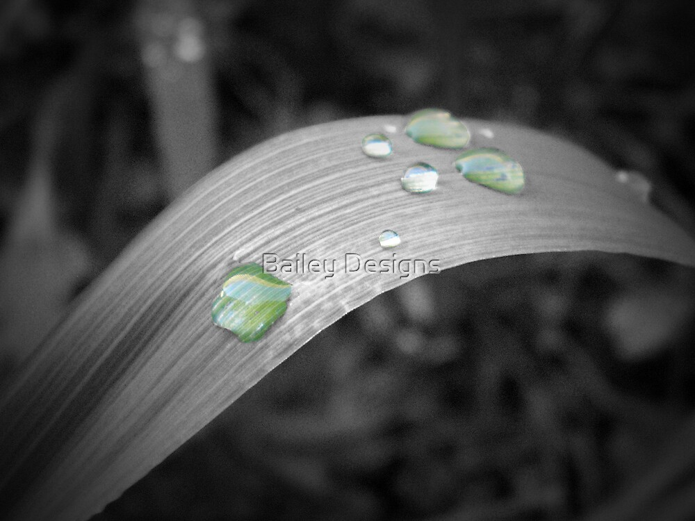 Raindrops on Grass by Bailey Designs