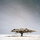 Serengeti dreaming by David Burren